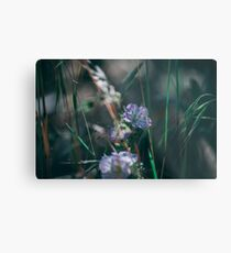 Pacific Crest Trail Wildflowers Metal Print