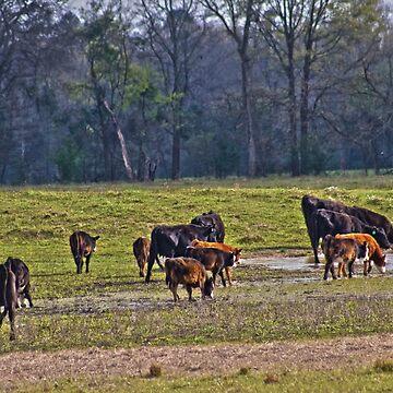 Farming by Bethany-Bailey