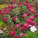 My Mum Garden by Linda Miller Gesualdo