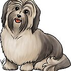 Havanese Dog by Jennifer Stolzer