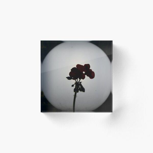 Flower in the Night Acrylic Block