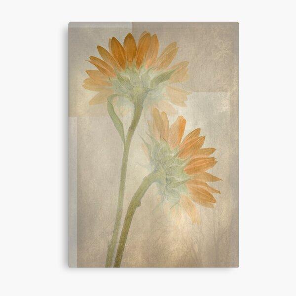 Sunflowers Fresco Metal Print
