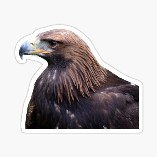 Glorious Golden Eagle Sticker