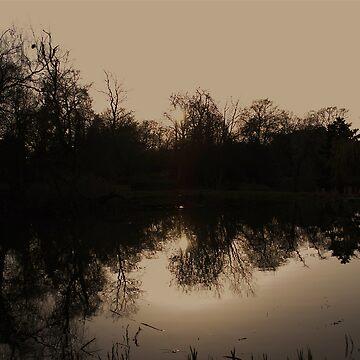 Reflections by dalzinho