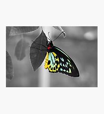 Coloured Butterfly Photographic Print