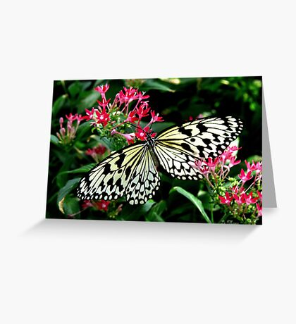 Intricate Insects Greeting Card
