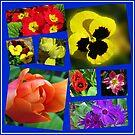 Eine Collage von Ostern-Blumen von BlueMoonRose