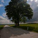 Arbor Vitae by Stefan Trenker
