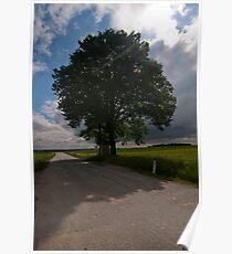 Arbor Vitae Poster