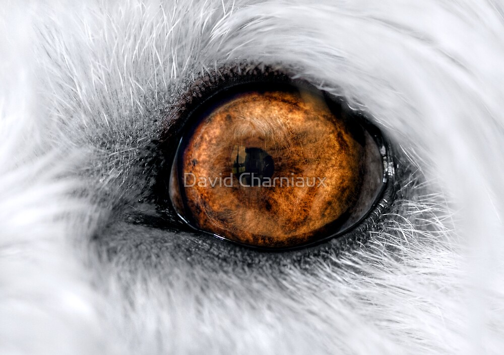 Tommy's eye by David Charniaux