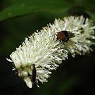 Bug Eyes by Linda Mathews