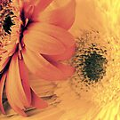 Flower 2 by Abigail Hiebert