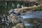 Cypress Creek 2 by Cathy Jones