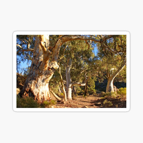Dry creek bed and gums Sticker