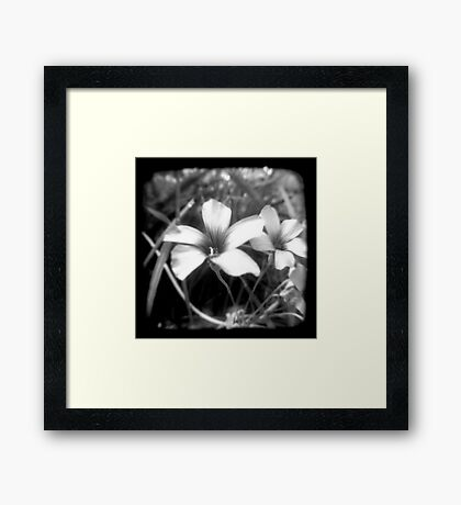 Oxalis - Through The Viewfinder Framed Print