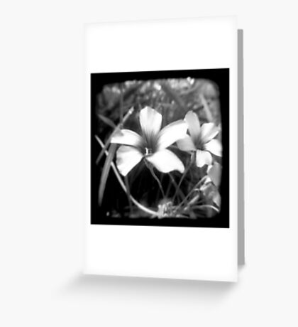 Oxalis - Through The Viewfinder Greeting Card