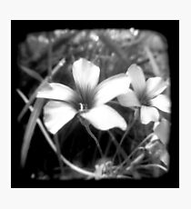 Oxalis - Through The Viewfinder Photographic Print