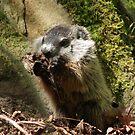 Groundhog by Daniel Owens