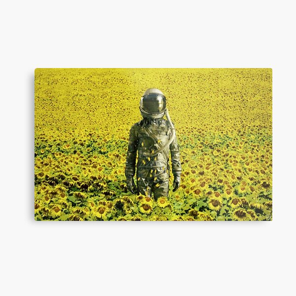 Stranded in the sunflower field Metal Print
