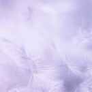 Soft feather by Anteia
