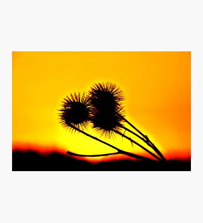 SunSet FLower Photographic Print