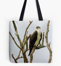 Osprey in naked tree Tote Bag