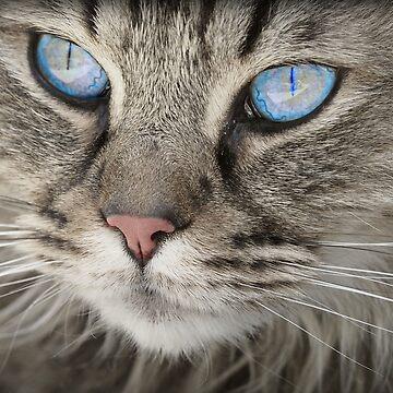 Grey Blue Cat Kitten by harrizon