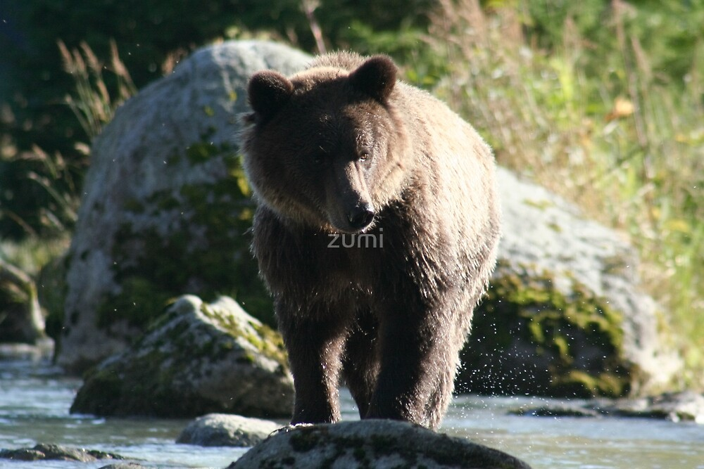 Fishing grizzly by zumi