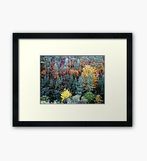 Multi-colour woodland Framed Print