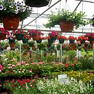 Lots of Flowers  by kimie