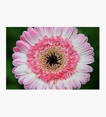 Daisy In Dry Brush Photographic Print