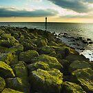 Rocks of Green by Stevie Mancini