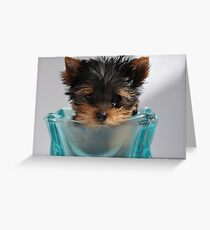 Yorkshire Puppy Greeting Card