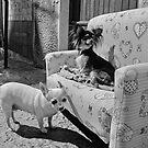 Hundeleben von Jean-Luc Rollier