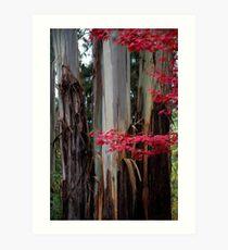 Splash of  Autumn Colours Art Print