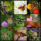 Butterfly Collage by Colleen Drew
