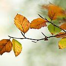 Autumn Leaves by John Burtoft