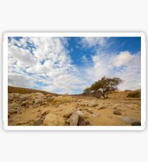 Enduring Acacia tree survives in the Desert Sticker