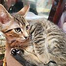 Bookstore kitty by Scott Mitchell