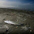 Fish on beach by ArtDambuster