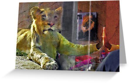 Man and lion communicating at san diego zoo greeting cards by man and lion communicating at san diego zoo by milton ginos m4hsunfo