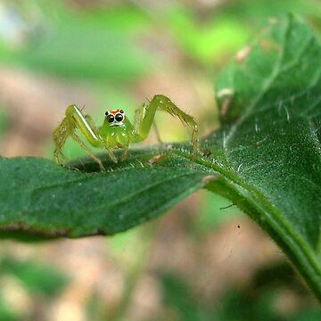 Teensy Weensy Spider  by MayLattanzio