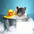 Rubb A Dubb Dubb A Rat in A Tub by strickland