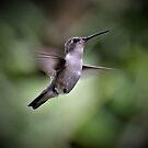 Hummingbird I by Len Bomba