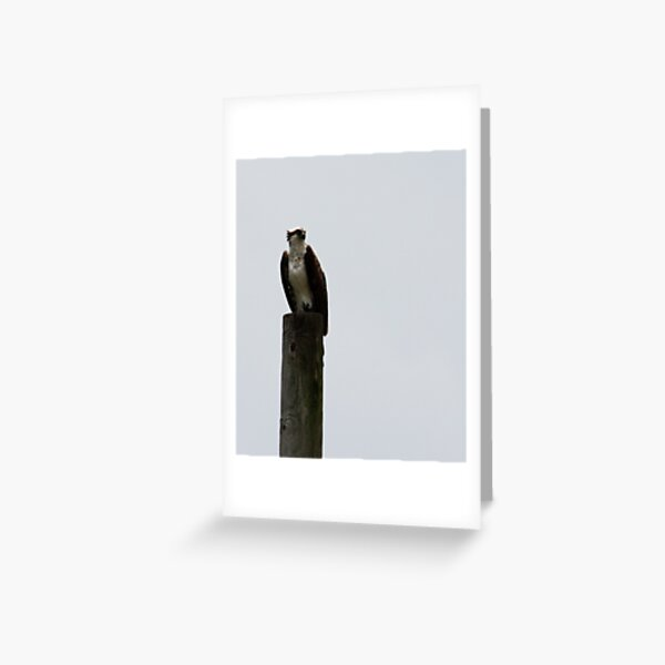 The Sentinel In the Storm Greeting Card