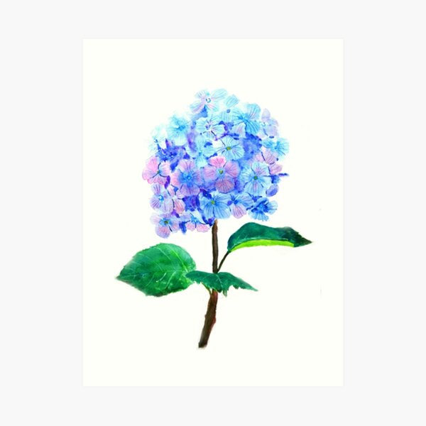 blue purple hydrangea flower  Art Print