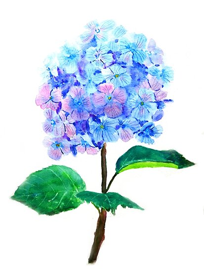 blue purple hydrangea by ColorandColor