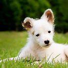 Hund - Ella von laura-S