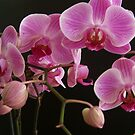 The orchid by bogna777