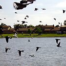 Pigeons In Flight by R&PChristianDesign &Photography